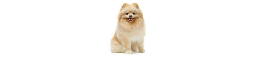 Vente d'accessoires, aliments et équipement pour chien - Dundeeshop