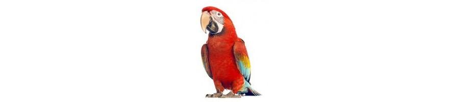 Alimentation perroquets