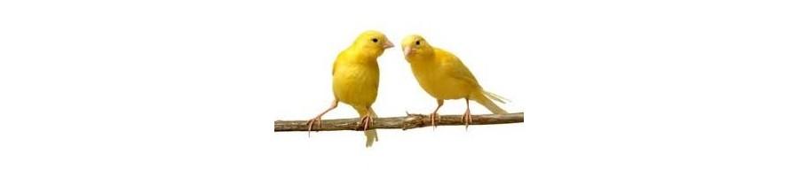Alimentation pour canaris