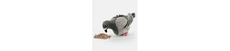 Pigeons et autre frugivore