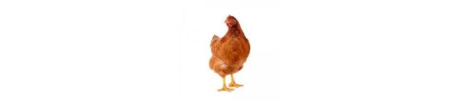 Alimentations pour vos poules .