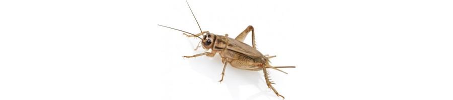 Insectes vivants